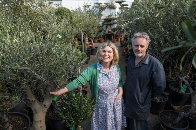 Norfolk Olive Tree Company - who we are