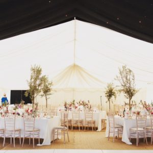 olive tree hire for weddings, parties and special events