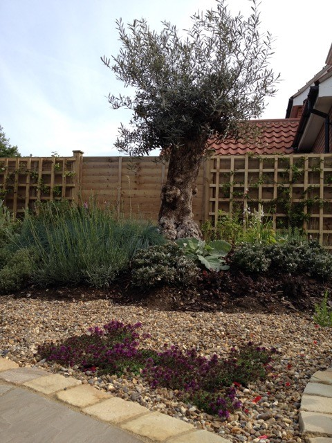 garden design and build service norfolk suffolk testimonial recommendation olive trees