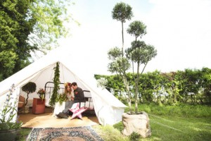 olive tree and wedding tent